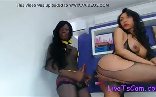 Ebony and latina tranny fuck in front of webcam LIVE